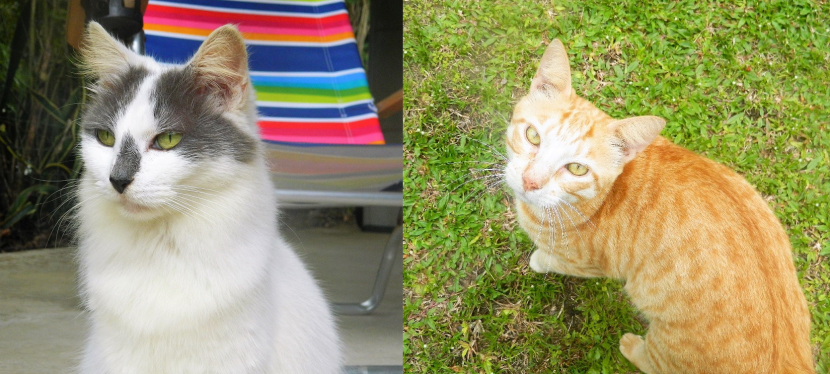 Two sweet cats that got left behind need your help.