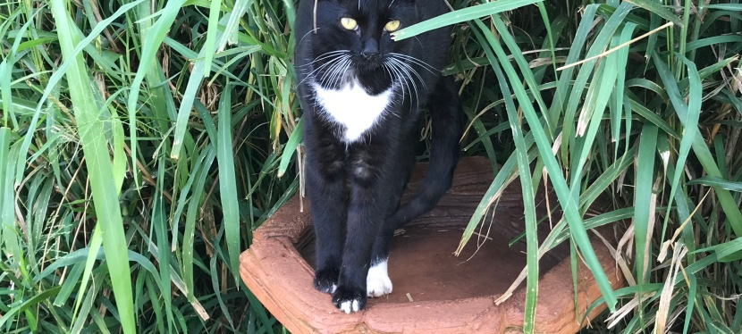 The Lanai Cat Sanctuary Might Be The Fountain OfYouth.